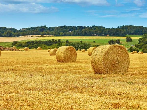 Farm Use Land